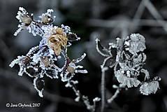 Fotografie - ZIMA II. - 7633802_