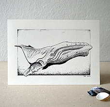 Kresby - Pod hladinou - II - 7638626_
