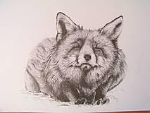 Kresba: Líška
