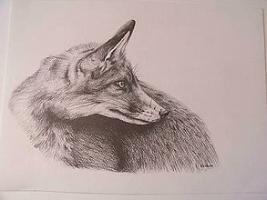 Kresby - Kresba: Líška-pohľad späť - 7640640_