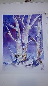 Obrazy - brezy v nočnom mraze - 7647388_