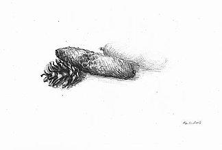 Kresby - Kresba realistická - šišky - 7670310_
