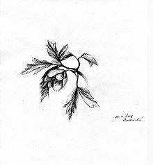 Kresby - Kresba realistická - květina - 7670489_