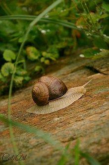 Fotografie - Pomaly ďalej zájdeš....(slimák) - 7684190_
