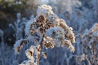 Fotografie - V zimnom šate - 7688000_