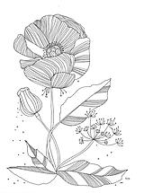 Obrázky - Kvetiny IV, kresba, obrázok - 7691743_