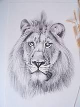 Kresba: Lev