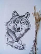 Kresba: Vlk