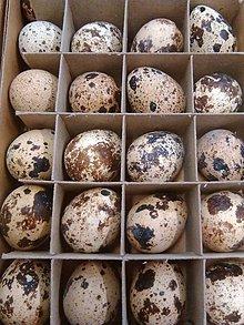 Iný materiál - Prepeličie vajíčka - 7746253_