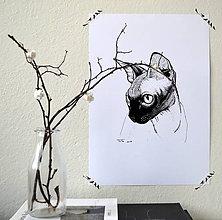 Kresby - Mačka \