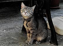 Fotografie - Kocúrik pod stolom 2 - 7780043_