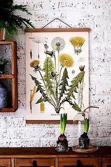 Grafika - Print na plátne CABINET BYLINKY /7 DRUHOV/ - 7790461_