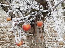 Fotografia jabĺčka
