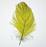 Kresby - Žlté pierko - 7824766_