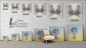 Obrazy - TRI ZLATÉ MAKOVICE  fotoplátno 50x70 cm - 7837874_