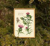 Obrazy - Tlač A4  Pichliač - Cirsium, akvarel - 7846567_