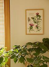 Obrazy - Tlač A4  Pichliač - Cirsium, akvarel - 7846569_