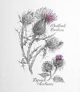 Obrazy - Bodliak - Carduus a Lopúch - Arctium, kresba ceruzkou - 7846602_