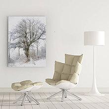 Obrazy - STARČEK fotoplátno 40x60cm - 7848626_