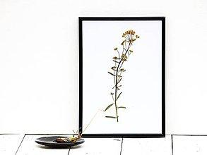 Obrázky - Obrázok z lisovaných rastlín - tráva I - 7868180_