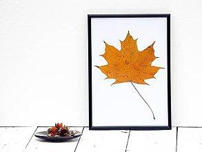 Obrázky - Obrázok z lisovaných rastlín - list jesenný I. - 7868230_