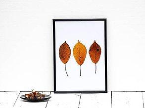Obrázky - Obrázok z lisovaných rastlín - list jesenný III. - 7868247_