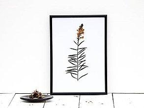 Obrázky - Obrázok z lisovaných rastlín - tráva IV - 7871352_