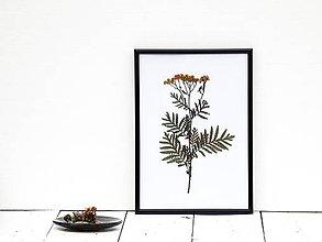 Obrázky - Obrázok z lisovaných rastlín - tráva V - 7871406_