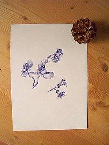 Kresby - Perokresba: kvet Kalanchoe - 7902413_