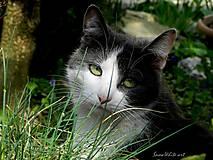 Fotografie - Mačka v tráve - 7910293_