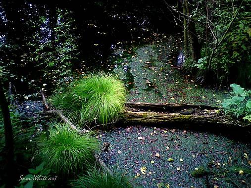 Zeleň v močarisku