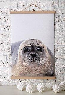 Grafika - Print na plátne SEAL A2 farebná verzia - 7921788_