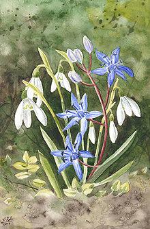 Obrazy - Snežienky a modrý kvietok - 7924980_