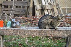 """Socha - Mačky """" jar na priedomí II ... . """" SET - 7929388_"""