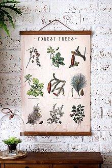 Grafika - Print na plátne FOREST TREES CABINET A2 - 7926955_