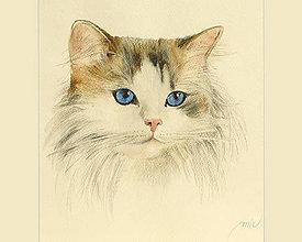 Obrazy - Mačička - maľba akvarelom a pastelom - 7927386_
