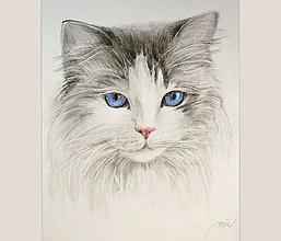 Obrazy - Mačička - kresba ceruzkou - 7932555_