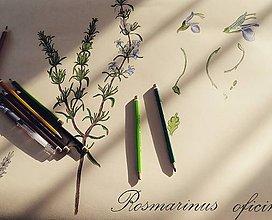 Kresby - Retro botanický plagát - rozmarín - 7936020_