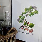Kresby - Obrázky drevín - hloh - 7950746_