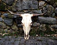 Dekorácie - Kravská lebka - 7960782_