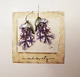 - ..hyacintové.. - 7964799_