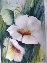Obrazy - Kvety biele - 7966323_