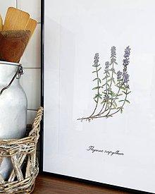 Kresby - Bylinkové obrázky - materina dúška - 7969150_