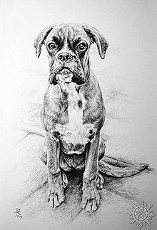 Kresby - Portrét psíka - 7996448_
