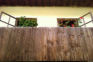 Fotografie - Muškáty - 8004964_