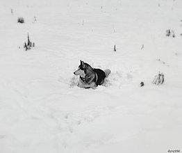 Fotografie - Snehová Kráľovná - 8014246_
