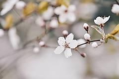 Grafika - Jarná príroda III - 8011048_