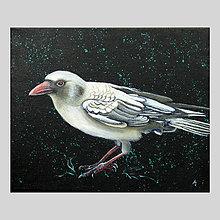 Obrazy - Bílá vrána I - olejomalba na plátně - 8012738_