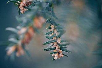 Grafika - V korune stromu - 8016354_
