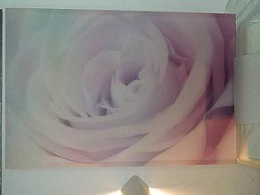 Obrazy - ruža - 8015046_